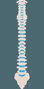 spinal cord 150x300 - Лечение позвоночника