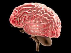 brain cancer 300x225 - Лечение рака мозга